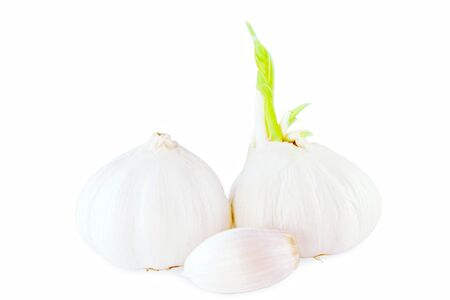 sprouted: garlic bulb and clove  with sprouted garlic in pure white background