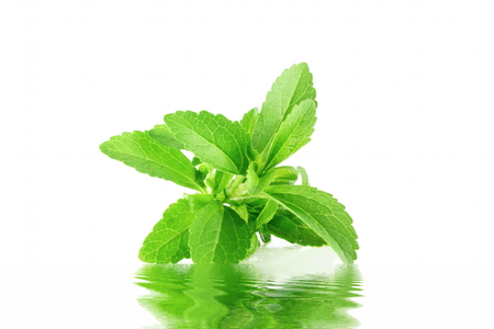 cures: stevia herb with water reflection in pure white background