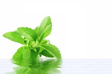 reflection water: erba stevia con acqua riflessione in sfondo bianco puro