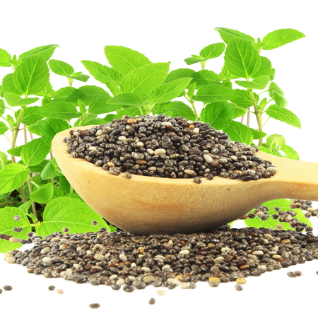 chia seed: chia seed in wooden spoon with chia plant in pure white background