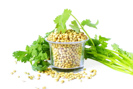 coriander seeds in jar with leaves  in white background Imagens
