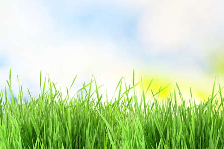 special effects: sky  texture and grass field background Stock Photo