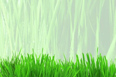 grass texture: grass texture background