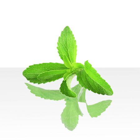 steviol: stevia sugar substitute herbs in pure white background