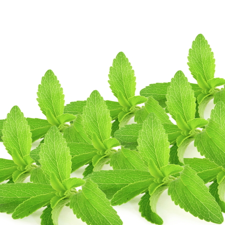 substitute: stevia sugar substitute herbs leaves in pure white background Stock Photo