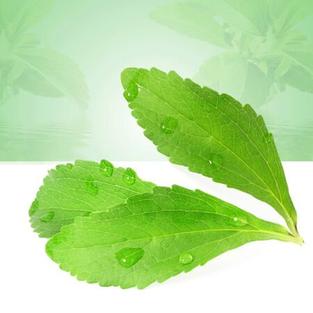 cures: stevia sugar substitute herbs leaves in green background Stock Photo