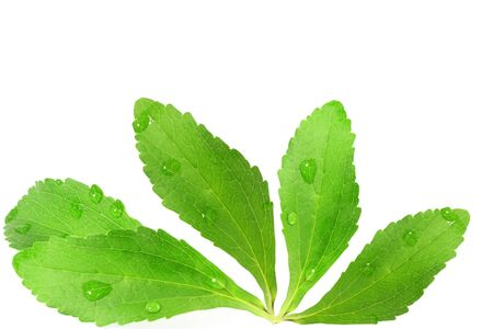 steviol: stevia sugar substitute herbs leaves in pure white background Stock Photo