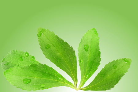 stevia sugar substitute herbs leaves in green background Stock Photo