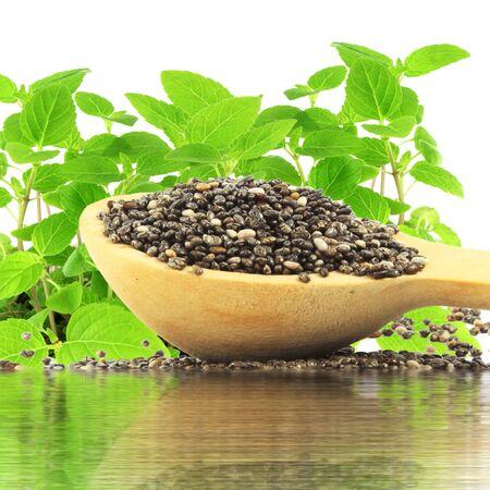 reflection water: semi di chia in cucchiaio di legno con la pianta e l'acqua di riflessione