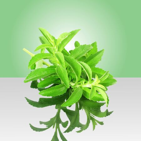 cures: stevia sugar substitute herbs with shadow in green background Stock Photo