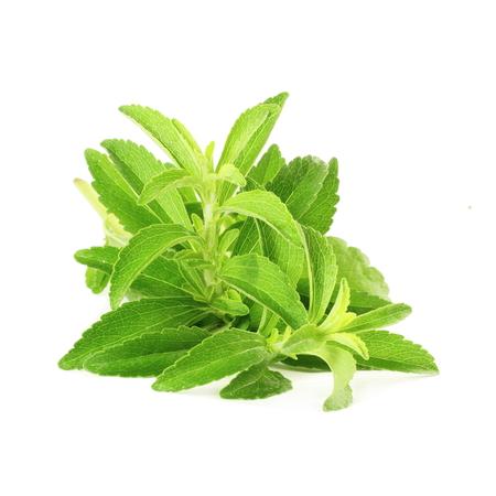 stevia sugar substitute herbs in pure white background
