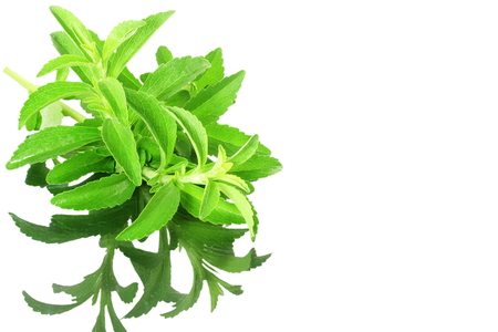 substitute: stevia sugar substitute herbs with shadow in pure white background