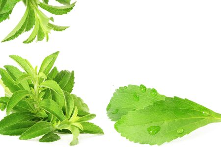 cures: fresh green Stevia rebaudiana leaves on white background