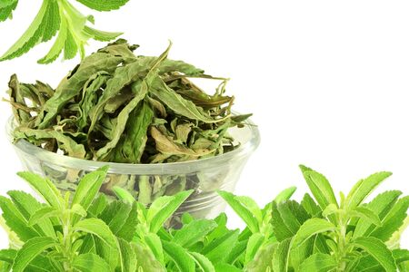 cures: fresh green and dried Stevia rebaudiana leaves on white background
