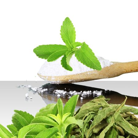 cures: fresh green and dried Stevia and extract powder on white background