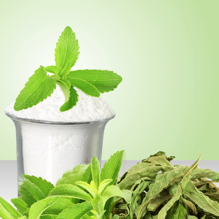 green powder: fresh green and dried Stevia and extract powder on green background Stock Photo