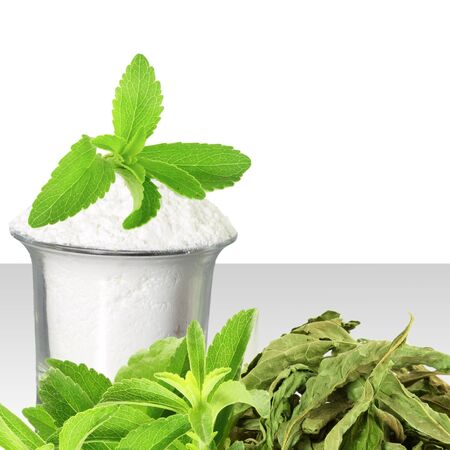 steviol: fresh green and dried Stevia and extract powder on white background