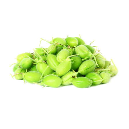 green young chickpeas pod on pure white background