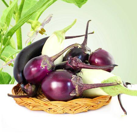 fresh eggplant or aubergine bringal
