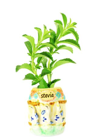 cures: stevia sugar substitute herbs plant in pot Stock Photo