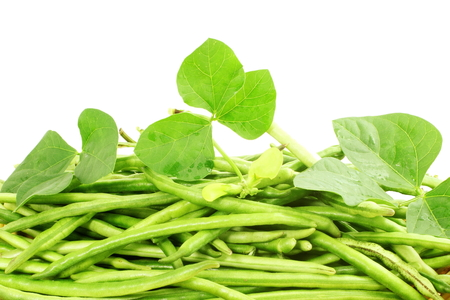 cow pea: fresh green Black eye peas beans with plant  in white background