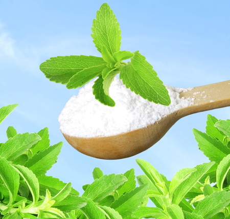 fresh green Stevia herb and extract powder in wooden spoon on sky background Standard-Bild