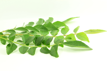 antidiabetic: fresh curry leaves or curry patta herb closeup on white background Stock Photo
