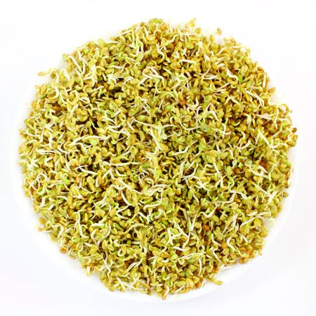 antidiabetic: sprouted Fenugreek ready for planting or salad Stock Photo
