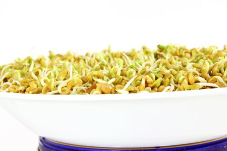 antidiabetic: sprouted Fenugreek ready for planting or salad closeup