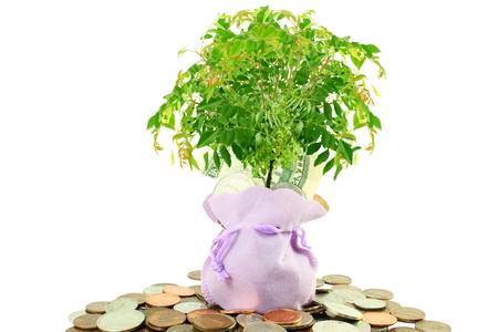 Saving and growing money concept idea