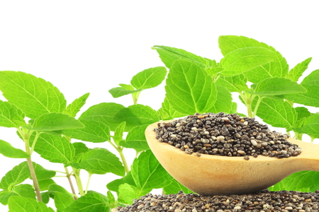chia seeds Salvia hispanica with plant with text copy space
