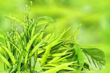 verse clusterboon of guar zingen Indiase groente in unfocus achtergrond Stockfoto