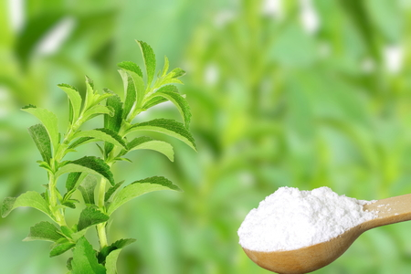 sugar substitute Stevia plant and extract powder on unfocus background