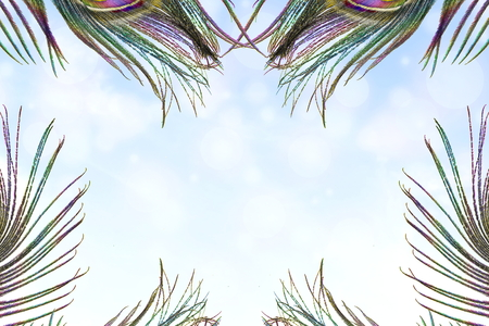 peacock feather over sky blue background with text copy space