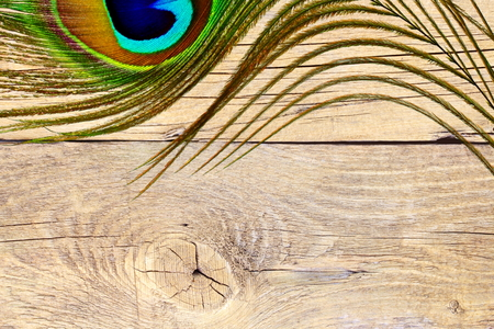 peacock feather over wooden background with text copy space