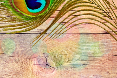 peacock feather over colored wooden background with text copy space