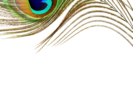 peacock feather over white background with text copy space Stock Photo