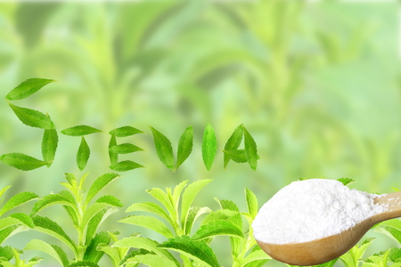 fresh green Stevia rebaudiana and extract powder in wooden spoon with leaves text and text copy space on bluer background