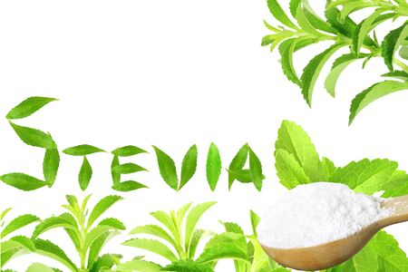 fresh green Stevia rebaudiana and extract powder in wooden spoon with leaves text and text copy space on white background