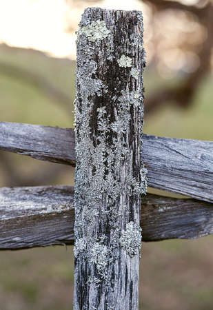 lopsided: Old protection,  wooden fence with moss