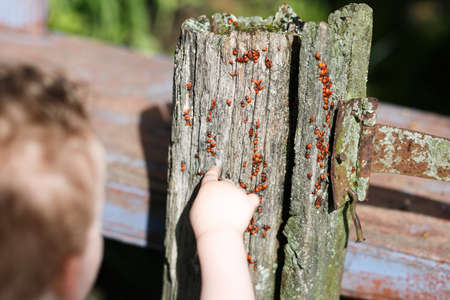 Child play whith bettle in wooden pillar Stock Photo