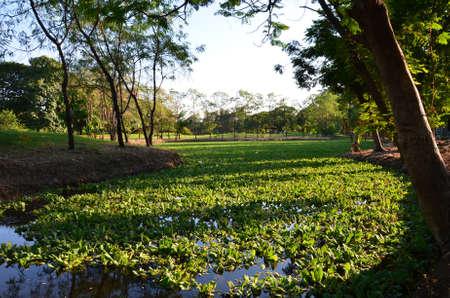 aguas residuales: La cubierta del estanque con la planta de agua verde Foto de archivo