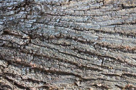 illust: natural tree texture Stock Photo