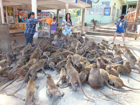 In the mountain area of Hua Hin, there are tons of monkeys, and they always surround people asking for food  Sometimes there are a risk to attack visitors  Stock Photo - 15204402