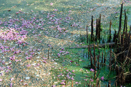 mangrove forest: A small natural pond is polluted  when things such as garbage, leaves, and flowers fall into it.