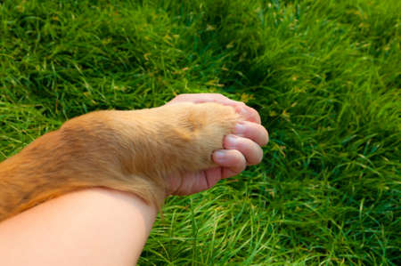 Human and dog hold hands. There are no boundary for love on earth. photo