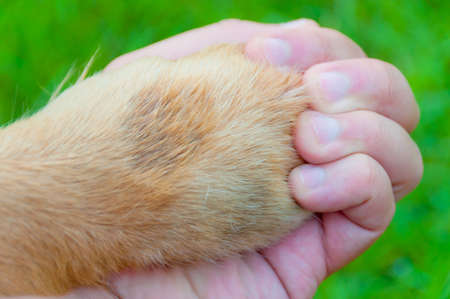 Human and dog hold hands. There are no boundary for love on earth.