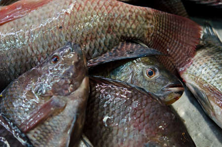 smelly: Life fresh-fish selling in the market of Thailand. Ready to be slaughter and sell for ingredients. Editorial