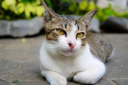 A kitten look sleepy Stock Photo - 12449639