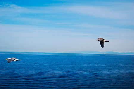 The blue ocean with blue sky blackground with sea gull  Stock Photo - 13396575